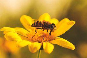 ¿Qué comen las abejas?