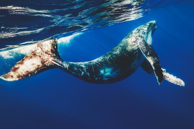 Que come la ballena