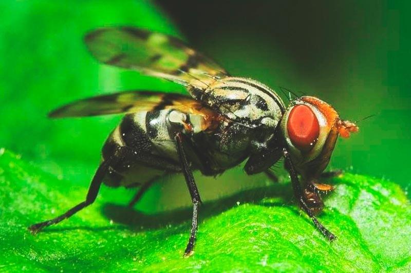 Que come la mosca