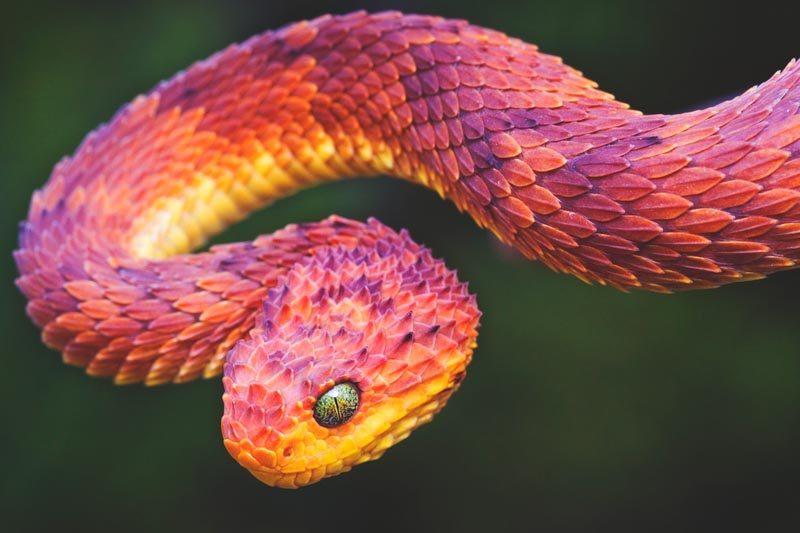 Que come la serpiente
