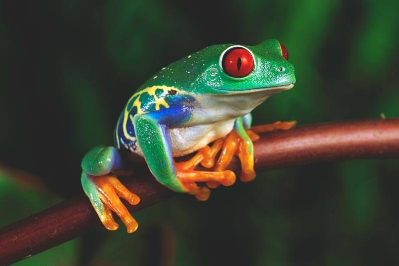 Resultado de imagen para ranas