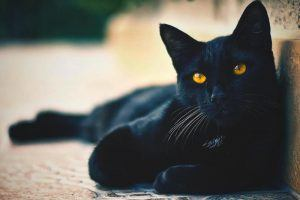 ¿Qué comen los gatos?
