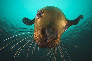 ¿Qué comen las focas?