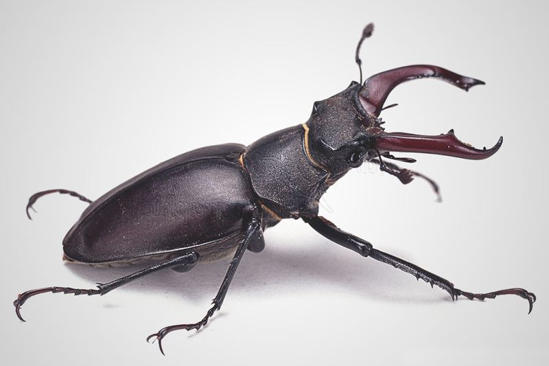 Qu comen los escarabajos - Insectos en casa fotos ...