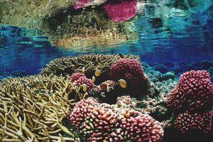 ¿Qué comen los corales?