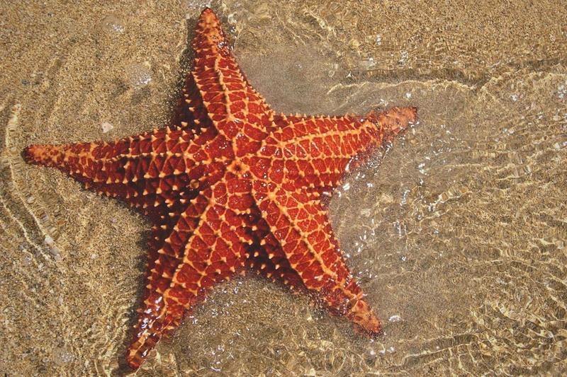 ¿Qué comen las estrellas de mar?