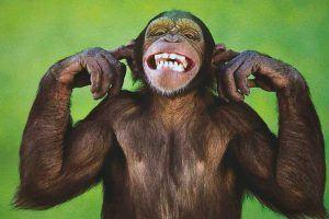 ¿Qué come el mono?