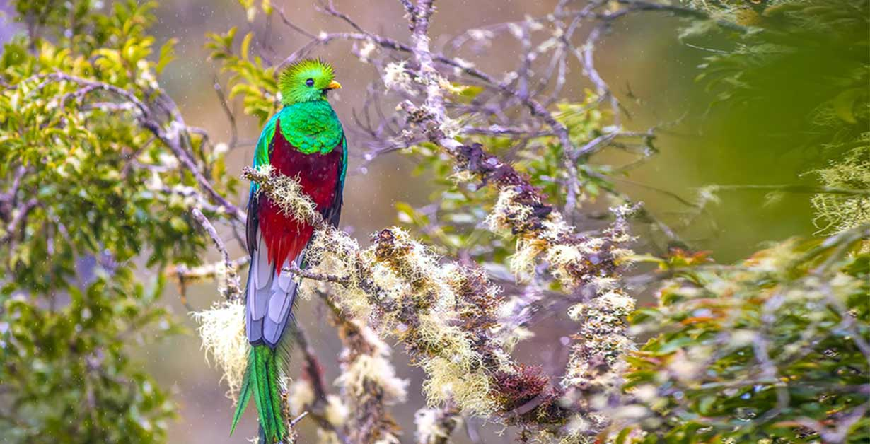 ¿Qué comen los quetzales?
